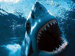 great white photo