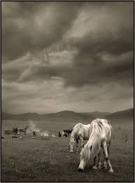 black and white photography of horses