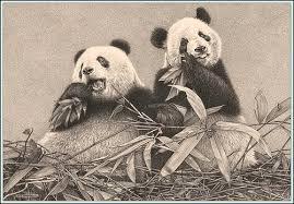 drawings of panda bears