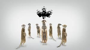 meerkat manor pictures