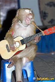 monkeys guitar