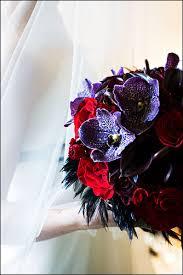 black orchids flowers