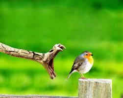 desktop wallpaper birds