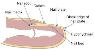 fingernails problems