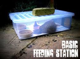 hedgehog feed