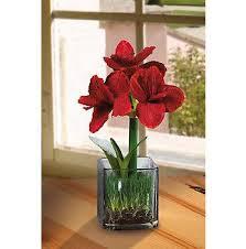 glass flower arrangements