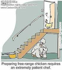 chicken cartoons