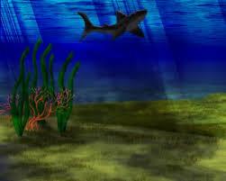 undersea images