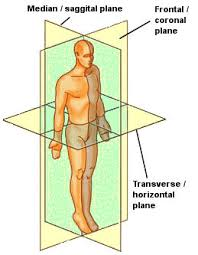 planes and axis of the human body