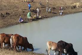 animals in sudan
