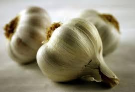 garlic images