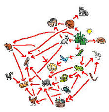food chain for animals