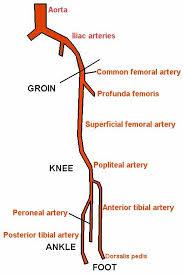 arteries of abdomen