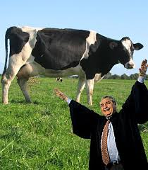 cow women