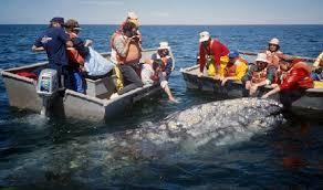 puerto vallarta whale