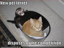 funny ferret pictures