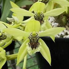 gambar flora langka