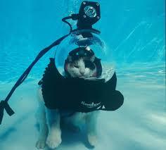 scuba diving cat