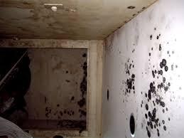 mold walls