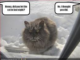 cold cats