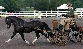 driving pony