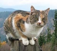 IMAGE(http://t0.gstatic.com/images?q=tbn:b7OM8hKJZ7yXdM:http://biogetopics.files.wordpress.com/2008/11/800px-coca-cat11.jpg)