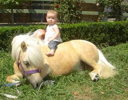 human pony ride