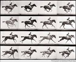 galloping horse photo