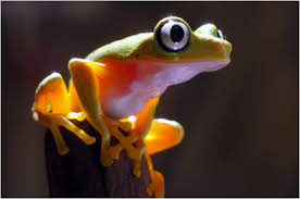 frog science