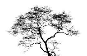 black white tree