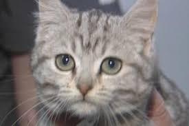 rspca kittens