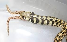 pet garden snake