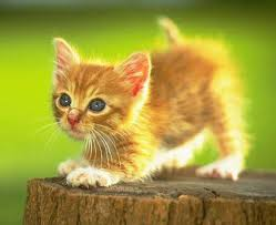 cute kitty images