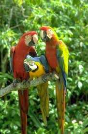 images of parrots