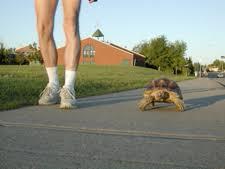 pet tortoises