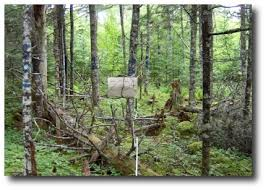 natural resources forestry