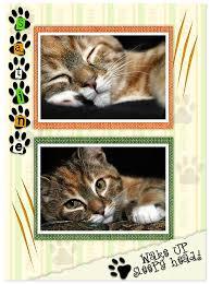 cat scrapbook