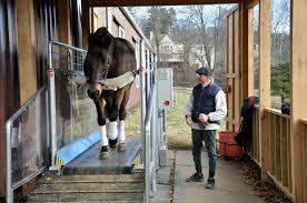 equine treadmill