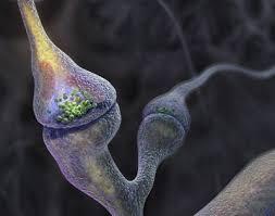 neuron art