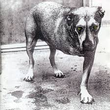Alice In Chains - Alice In Chains