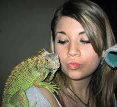 iguana breeds