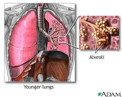 mucus in lung