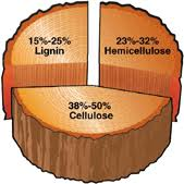 tree cross section diagram