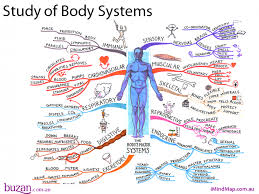 map of body