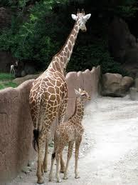 giraffe baby stuff