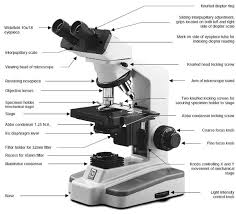 compound light microscope parts