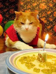cat birthday party
