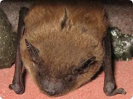 bat trap