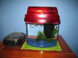 1 gallon fish tank