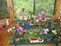 orchid stand